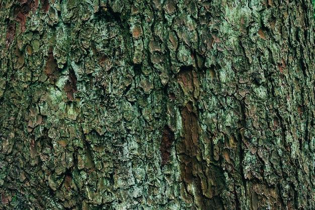 Closeup colpo di struttura in legno di un albero