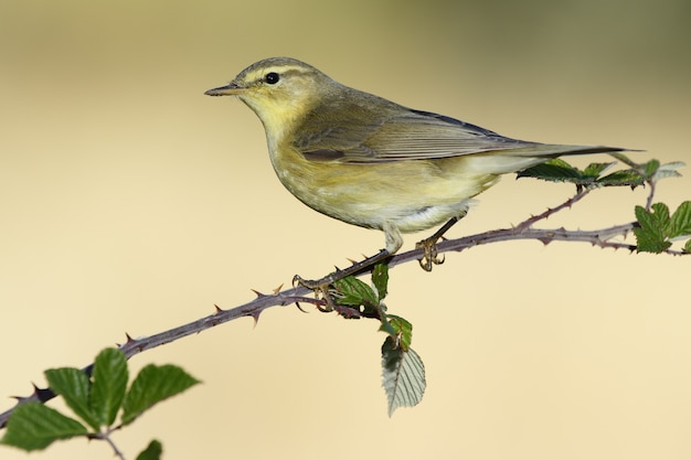 Closeup shot of a yellow-feathered warbler perched on a tree branch