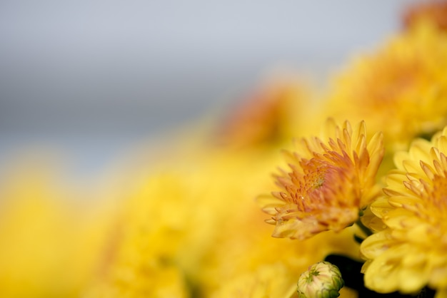Closeup shot of a yellow flower with a blurred background