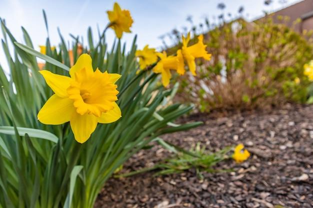 Colpo del primo piano di un fiore giallo