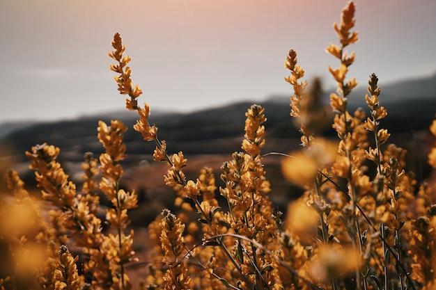 Colpo del primo piano dei fiori petalo gialli in un bello campo