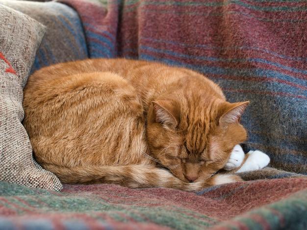 Primo piano di un gatto rosso addormentato su una coperta su un divano sotto le luci