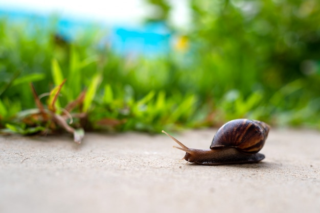 Closeup snail in garden