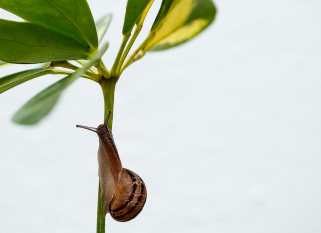 Closeup of a snail on a plant under the sunlight