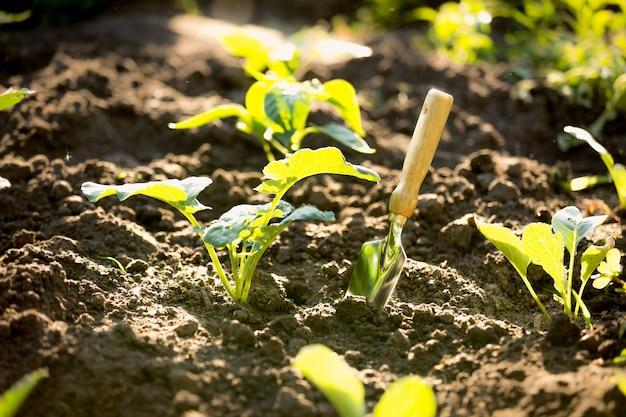Лопата крупным планом в саду с небольшими ростками