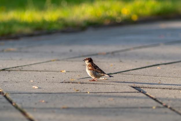 Primo piano di un passero in piedi su un sentiero di pietra