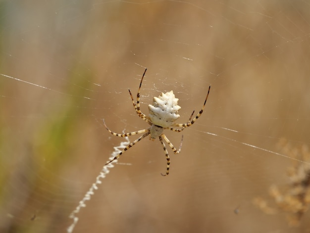 Closeup of a spider on a plant