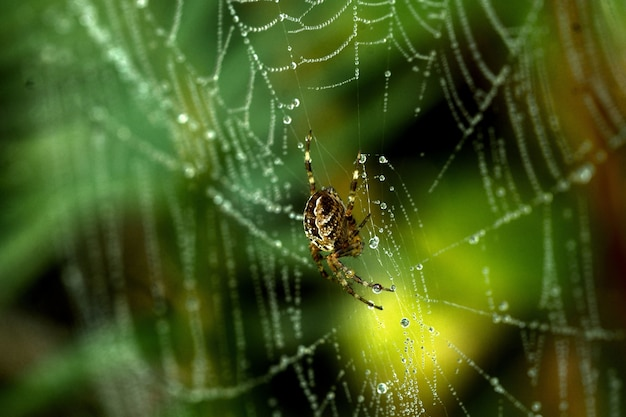 Closeup of a spider on a spider web