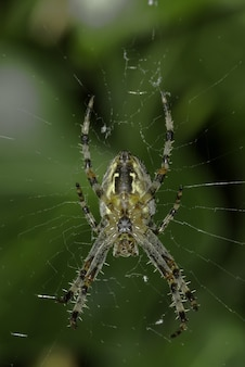 Closeup of a spider on the web under the sunlight with greenery