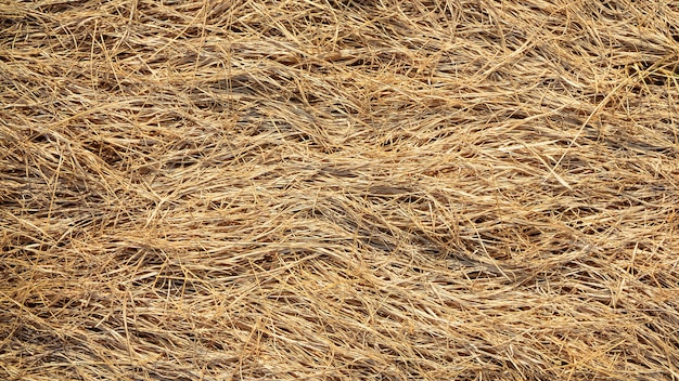 Closeup straw at roof hut in the countryside