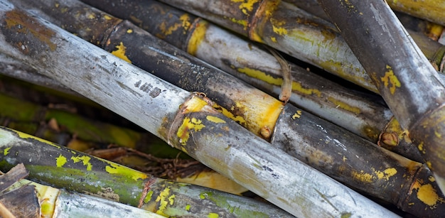 Closeup of sugar cane pack