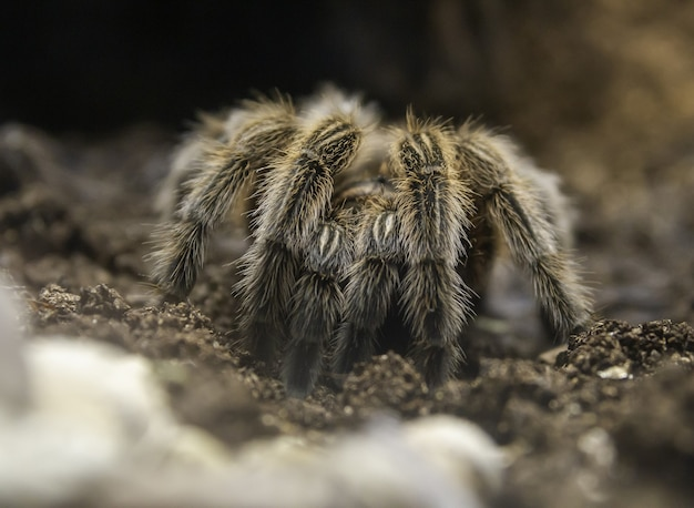 Closeup of a tarantula on the ground under the sunlight