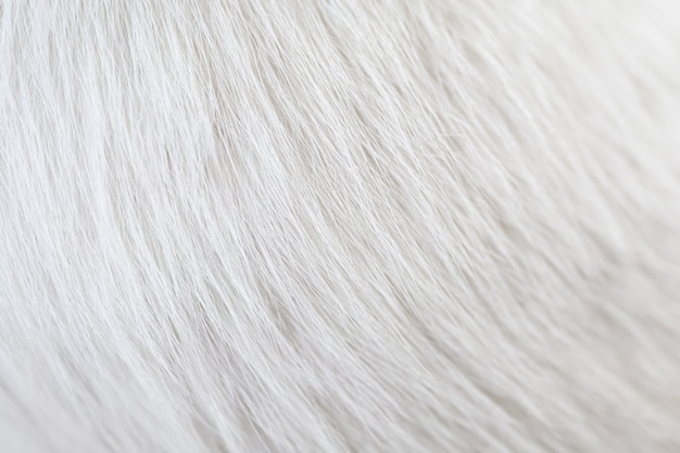 Closeup of texture cat white hair skin. using as wallpaper or background.