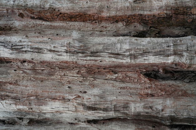 Closeup texture of decayed old tree. detail of old wood texture background.