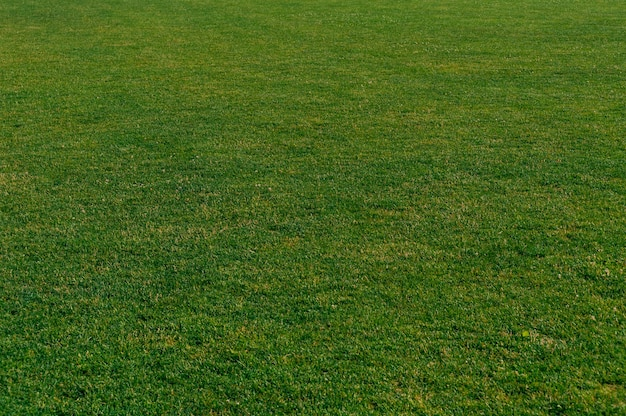 Closeup, texture of a green grass lawn on a home lawn.