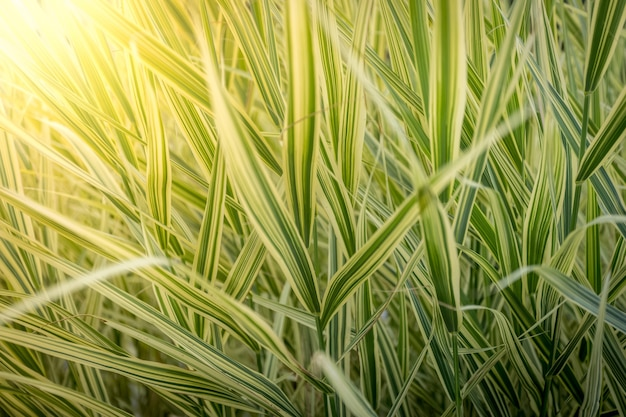 밝은 태양 광선에 긴 녹색 잔디의 근접 촬영 질감