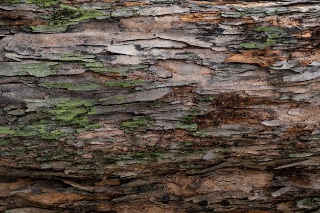 木の樹皮の質感をクローズアップ。自然の木の樹皮の背景のパターン。