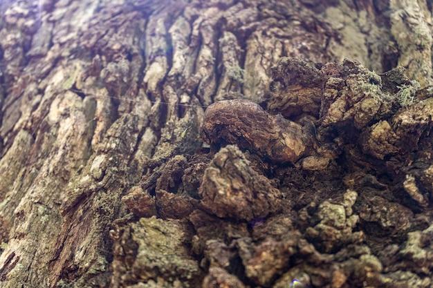 균열 패턴, 추상적 인 배경, 2021 나무 껍질의 근접 촬영 질감