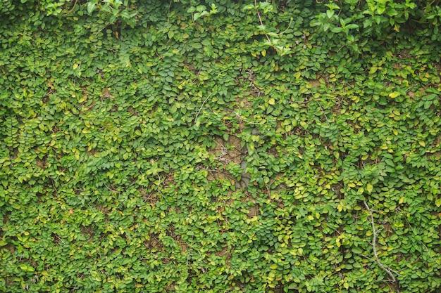 질감 배경 벽에 녹색 식물을 근접 촬영