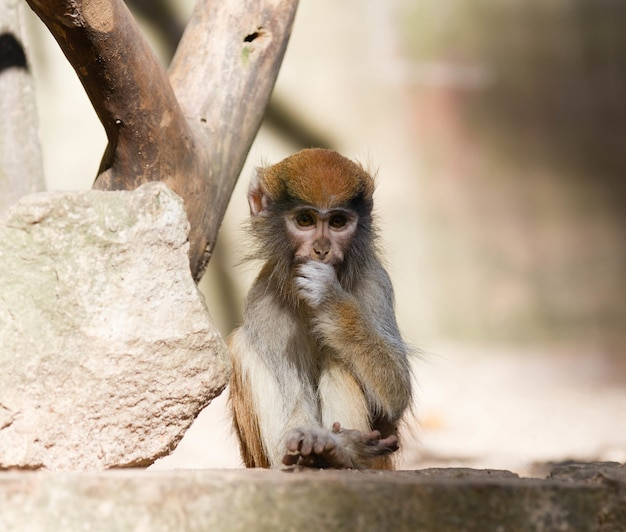 Closeup of a tiny cute monkey sitting on the stone next to a tree on a blurry surface