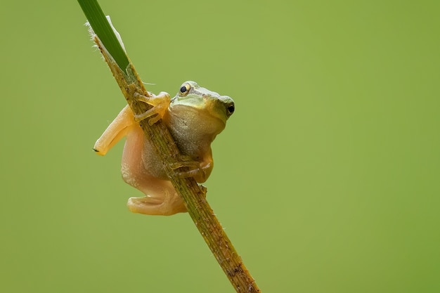 Closeup of a tiny european tree frog on a branch under the sunlight with a blurry background