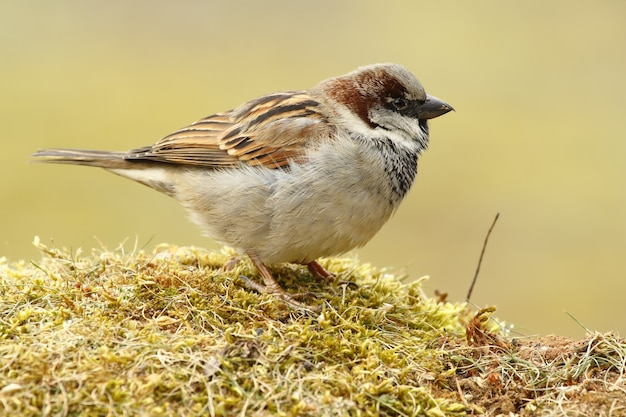 Closeup of a tiny sparrow standing on the ground under the sunlight