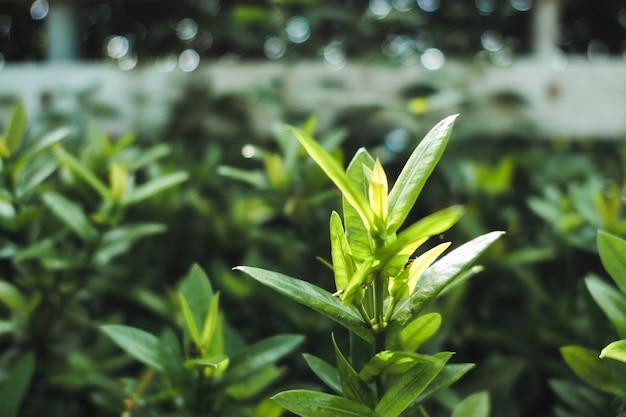 Closeup top of green leaf in lush garden