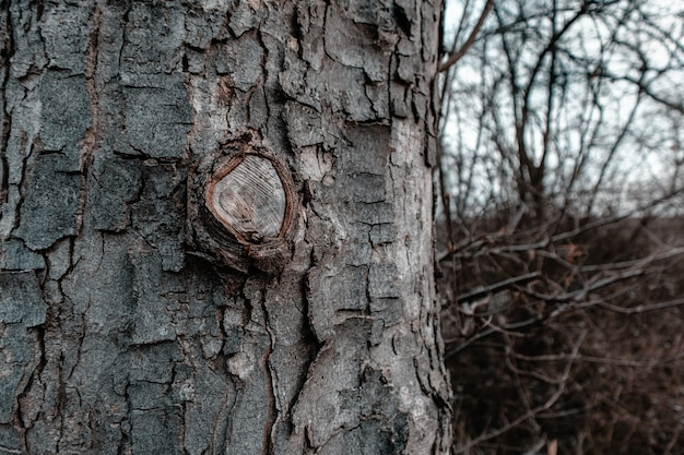 Closeup of a tree bark surrounded by branches