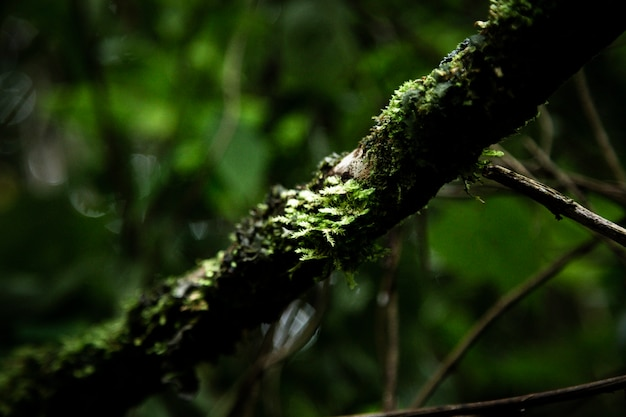 Closeup of tree branch covered by moss