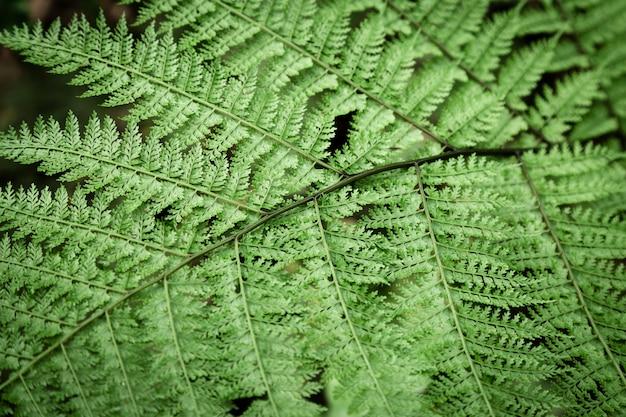 Closeup tropical fern leaves