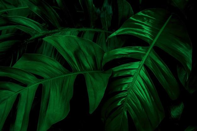 クローズアップ熱帯緑の葉の自然の背景