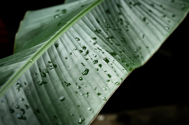 Closeup of tropical leaf with dewdrops