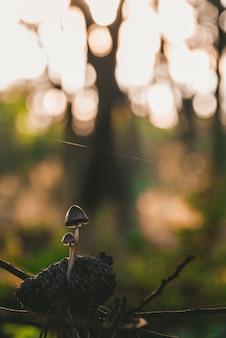 Un primo piano di due piccoli funghi comuni in una foresta circondata da pianta