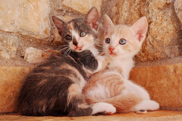 Closeup of two young cats cuddling together at a corner of a stone wall