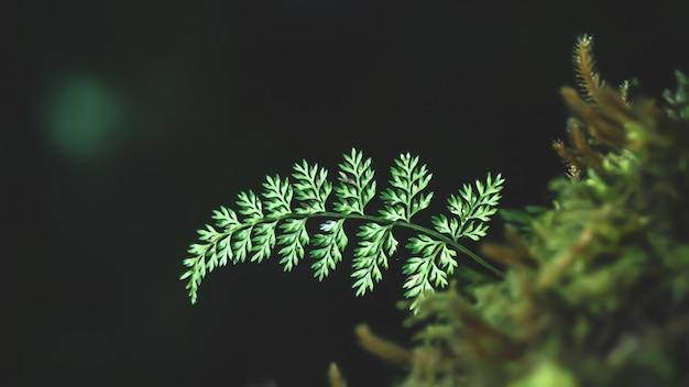 Closeup various plants in rainforest