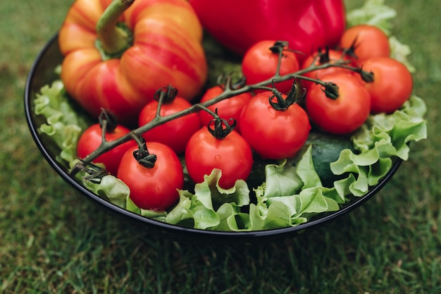 Closeup of vegetables lying on plate on grass
