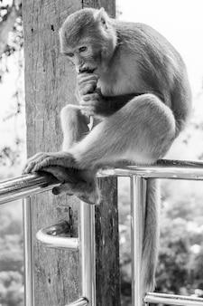 Foto verticale di gradazione di grigio del primo piano della scimmia del primate del macaco del reso che si siede su un'inferriata del metallo