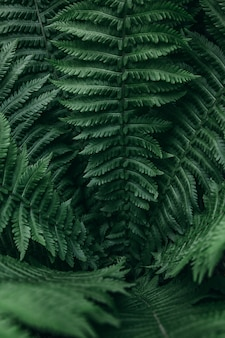 Closeup vertical pattern of fern leaves