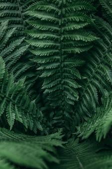 고 사리 잎의 근접 촬영 수직 패턴