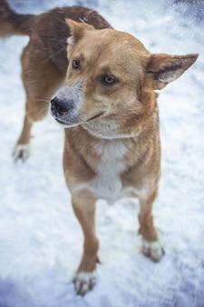 Primo piano colpo verticale di un cane marrone sotto tempo nevoso guardando lateralmente