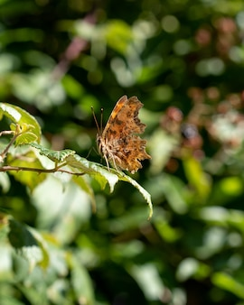 Closeup vertical shot of a butterfly on a green leaf