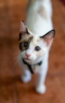 일광 아래 귀여운 고양이의 근접 촬영 세로 샷
