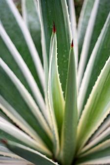 緑のリュウゼツランの葉のクローズアップ垂直ショット