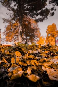 Colpo verticale del primo piano delle foglie gialle cadute sulla terra con gli alberi vaghi nei precedenti