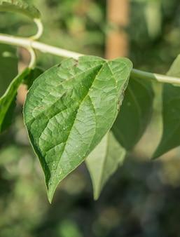 Primo piano vista verticale di una foglia verde con uno sfondo sfocato