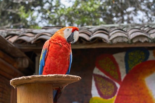 Primo piano di un colorato macaw scarlatto