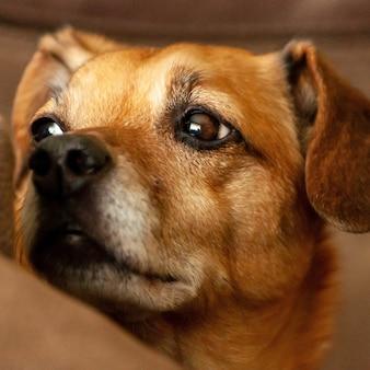 Vista ingrandita di un simpatico cane marrone con una faccia triste
