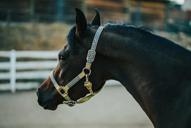 Vista ingrandita di un cavallo nel ranch che indossa imbracatura con uno sfondo sfocato
