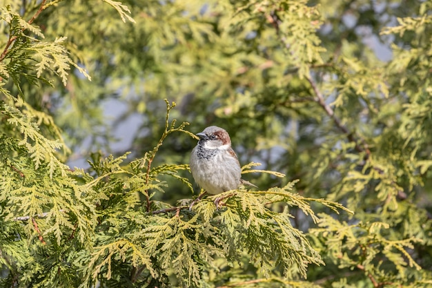 Vista del primo piano di un passero domestico che riposa su un ramo di albero