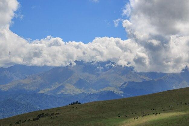 근접 촬영 보기 산과 계곡 국립 공원 dombai, 코카서스, 러시아, 유럽에서 장면. 여름 풍경, 햇살 날씨, 극적인 푸른 하늘과 화창한 날